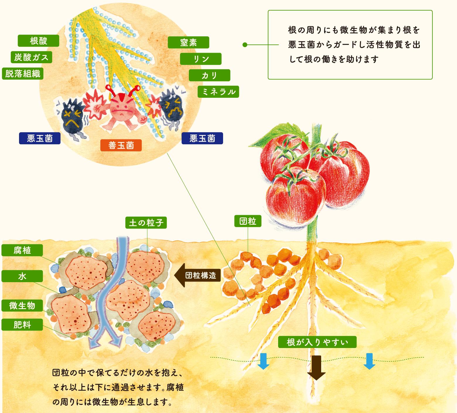 微生物資材