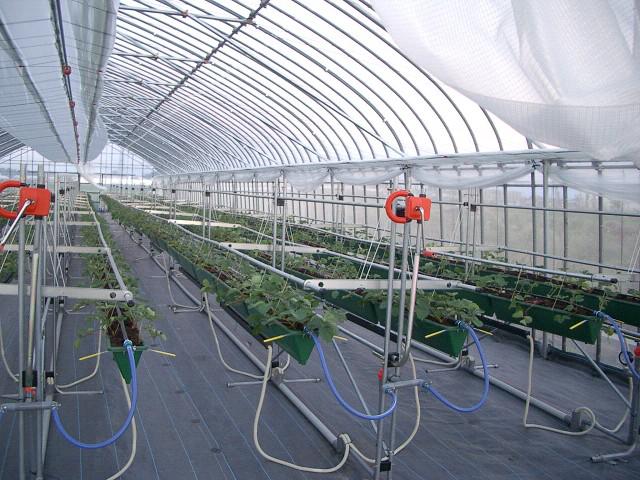少量土壌栽培についてのポイント